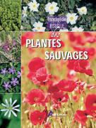 Encyclopédie visuelle des plantes sauvages | Polese, Jean-Marie